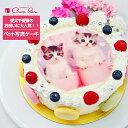 オリジナル写真のデコレーションケーキ ペットの写真ケーキ≪2〜3名用≫4号サイズ直径12cmから≪23〜30名用≫10号サイズ直径30cmまでご用意ケーキは絶品マカロンでかわいくデコレーション生クリーム・イチゴクリーム・チョコクリーム