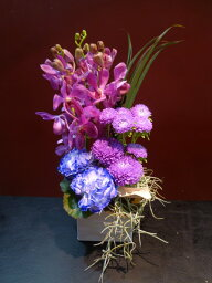 スターカーネーション Purple Carnation!!
