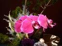 オンシジューム 【アレンジメント】松 胡蝶蘭 アンスリューム染めピンポンマム オンシジューム葉牡丹 フィロデンドロン
