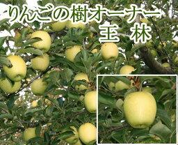 りんご 王林(おうりん)オーナー制度 りんごの樹のオーナー 王林 わい化