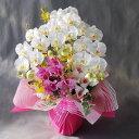 カトレア 胡蝶蘭M&カトレヤ-白黄 3F高さ70cm×巾40cm造花・光触媒