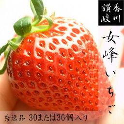 いちご 香川県産 女峰いちご 秀30または36個