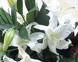 ユリ 【超ポイントアップ祭期間中ポイント2倍】タイムセール豪華なカサブランカの花束♪ ユリの王様 白 百合 カサブランカが3本入り ギフト バレンタインデー 誕生日 お供え
