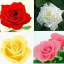 黄 2020 お好きな色と本数でバラの花束【カラー:黄色・白・ピンク】お祝い・ギフト・誕生日・プレゼントに【ギフト】【母の日】【クリスマス】【母の日】【誕生日】【バレンタイン】バラ