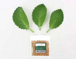 マザーリーフ 幸福の葉っぱ(マザーリーフ) 3枚セット「他との違いはもぎたてフレッシュで出荷」+イオン交換樹脂肥料