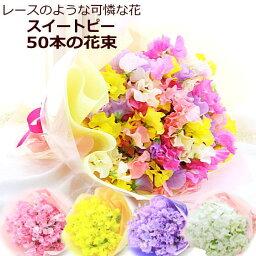 スイートピー お届け期間限定!春の香りを贈っちゃおう♪選べるスイートピー(スイトピー)50本の花束【HLS_DU】