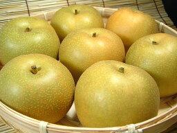 梨 送料無料・和歌山の梨 豊水品種 4kg【9玉】ギフト選別[特選品]寺西梨園からお届けします。