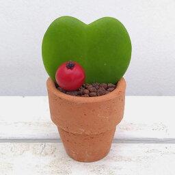 ラブラブハート 観葉植物/ラブラブハート:素焼き鉢(愛をかなえるホヤハート)