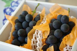ぶどう 高尾(たかお)葡萄通販 山形産。種なし皮ごと食べられるぶどうを販売取寄。約1kg 約2房