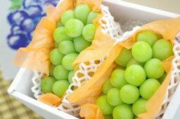 ぶどう シャインマスカット葡萄通信販売 種なし皮ごと食べられるぶどうを販売取寄。2房 約1100g