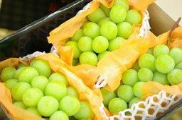 ぶどう シャインマスカット葡萄取寄販売 種なし皮ごと食べられるぶどうを通販で。3房 約1650g