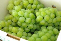 ぶどう 完熟ナイアガラ葡萄通販 芳醇な香りの山形ぶどうを販売。約2kg 5〜9房 山形産