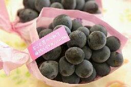ぶどう ナガノパープル葡萄通販 長野県産。種なし皮ごと食べられるぶどうを販売取寄。1房入