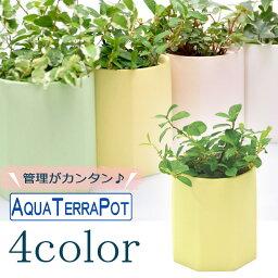 ワイヤープランツ インテリアグリーン アクアテラポット ペールオクタゴン7 全4色 底面給水陶器鉢入り ギフト 観葉植物 シュガーバイン アイビー ヘデラ ペペロミア ワイヤープランツ