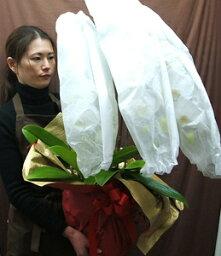 胡蝶蘭(全般) 胡蝶蘭 3本立ち ギフト お祝い 胡蝶蘭 開業祝い 開店祝い 開業祝 新築祝い