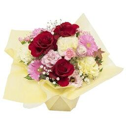 スターカーネーション 【春のお花・カーネーション・バラ】お祝い・お誕生日・結婚祝・出産祝・開店祝・結婚記念日・お礼・発表会・季節のお花・お返しプレゼント・成人式・バレンタイン・ホワイトデー・退職祝い・入学祝い・卒業祝い・合格祝いなど。