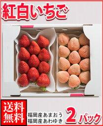 いちご 福岡産紅白いちごあまおう&淡雪2パック