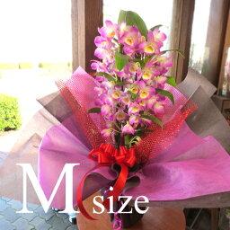 デンドロビウム デンドロビューム Mサイズ 鉢植え 高品質でもお求めやすい価格で 洋蘭 洋ラン 送料無料 薫る花 デンドロビウム フラワー 鉢花 花鉢 お歳暮 御歳暮