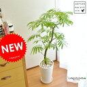 エバーフレッシュ 【 観葉植物 】【美樹形】 エバーフレッシュ シンプル白色陶器に植えた アカサヤネムノキfloor green series ネムの木【母の日ギフト】