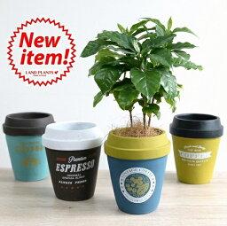 コーヒーの木 【4カラー】 コーヒーの木 コーヒーカップ型 陶器鉢 Mサイズ チルドカップコーヒーノキ・3号・4号・植木鉢・底穴あり・フラワーポット 白・黒・青・オレンジ・ミント・ネイビー・グリーン