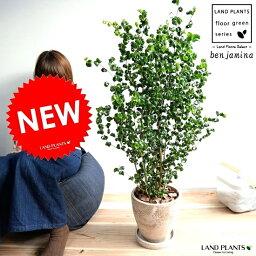 ベンジャミン ベンジャミン (バロック) 茶色 エッグ型 ラウンド 陶器鉢 8号 鉢植え 鉢 苗 苗木 大型 観葉植物 茶 ブラウン 砂色 ベージュ ラウンド 丸 送料無料