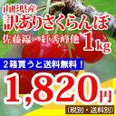 さくらんぼ 【訳あり】山形産さくらんぼ(佐藤錦、紅秀峰、他)1kg