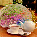 サプライズフラワー ロマンチックかすみ草<7本と7色のフレーバーティー>キラキラ輝く花束と紅茶。 [ホワイトデー お祝い プレゼント バースデー 誕生日 歓迎会 送迎会 開店祝い 結婚祝い 退職 送別 などに◎なフラワーギフト]