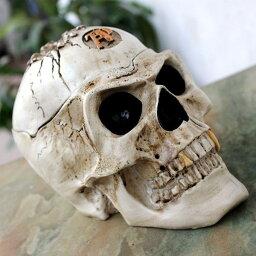 歯の灰皿 灰皿 頭のてっぺんが割れた金歯のスカル