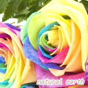 レインボーローズ レインボーローズ 1本から購入OK 11本以上の購入で基本送料無料 オランダ産  誕生日 お祝い 花 フラワー 結婚記念日 お礼 レインボーバラ 無限の可能性 虹色のバラ バラ サプライズ 還暦祝い 長寿祝い 開店祝い