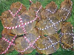 上海蟹 【お得なオスメス食べ比べ10匹セット(松)】上海蟹 オス 公 大5匹@190g前後 メス 母 特大5匹@130g前後 特上 ギフトにオススメ 蟹 贈答品 オーダー頂いてから急速冷凍