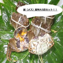 上海蟹 【本場中国産】上海蟹 メス 母 特売! 超特大5匹セット @150g前後 贈答 ギフトにオススメ 蟹 オーダー頂いてから急速冷凍