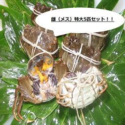 上海蟹 【本場中国産】上海蟹 メス 母 特売! 特大5匹セット @130g前後 贈答 ギフトにオススメ 蟹 オーダー頂いてから急速冷凍