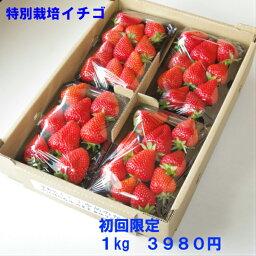 いちご 特別栽培 いちご 身内へのギフト・贈答、うち使い用 1箱1kg(250g×4パック) ゆめのか 愛知県産 フルーツ 【送料無料】