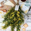 リース 2/5〜3/10までのお届け限定!生花からドライを楽しむミモザスワッグ『ミモザ・スワッグ』フレッシュな状態で発送。玄関 誕生日プレゼント 送別 結婚祝いドライフラワー リース スワッグ インテリア 春 実物など