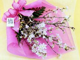 チューリップ さくら サクラ 桜 卒園 卒業式 謝恩会 サクラ咲く 合格祝い 卒業祝い 入学祝い 啓翁桜(けいおうざくら)の花束 送料無料 オプションでユリ・チューリップも追加できます花