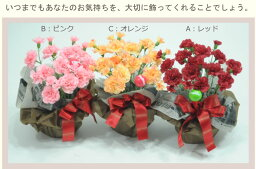 鉢 ■カーネーション鉢寄せ植え シルクフラワー【あす楽】【楽ギフ対応】造花で気持ちを永遠に!