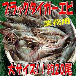 ブラックタイガー ◆有頭ブラックタイガーエビ◆業務用(約20尾)1.3kg【05P03Dec16】
