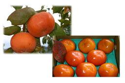 柿 売有機質肥料、低農薬、たっぷりの天然ミネラルとにがり、吉野の気候風土が、ふるさとを思い出す味を柿に与えた。富有柿3Lサイズ 20個(約7.5kg)【発送 10月下旬 〜 12月上旬】05P13Dec14