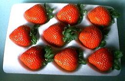 いちご 宝石の輝き、霞ヶ浦の甘味と酸味の絶妙なバランス、有機肥料栽培【新種いちご】やよいひめorかおり野9個入り2パック【発送12月上旬 〜 3月下旬】(大粒の9個入りは1月以降の収穫、発送になります。特別なパッケージで大切にお届けします)