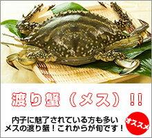ワタリガニ カニ超新鮮!獲れたての活き締めワタリガニ(メス)1尾(約300g)