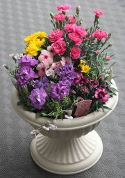 鉢 母の日の寄せ植え【母の日】【鉢花】鉢植え フラワーギフト プレゼント 贈り物 カーネーション おしゃれ 豪華