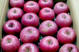 りんご マル組りんご園の「サンふじりんご」青森産 藤崎町 (5kg大玉14〜16個入り)〔店長おすすめ果物です〕太陽の恵みをいっぱい受けて真っ赤に日焼けしたプレミアムなリンゴです。[有機肥料100%・減農薬栽培採用]  ふじりんご/ふじ りんご/林檎