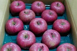 りんご マル組りんご園の「サンふじりんご」青森産 藤崎町 (5kg 大玉12〜13個入り)〔ご贈答おすすめ果物です〕太陽の恵みをいっぱい受けて真っ赤に日焼けしたプレミアムなリンゴです。[有機肥料100%・減農薬栽培採用] サンフジ/ふじりんご/林檎