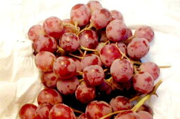ぶどう レッドグローブ葡萄(れっどぐろーぶぶどう) 約2kg チリ・アメリカ産ワインカラーの大粒で、甘いブドウです 「種あり」