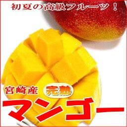 マンゴー 宮崎産 高級 完熟マンゴー (かんじゅくまんごー)大玉 2Lサイズ 2玉入り 簡易箱初夏の高級フルーツ 甘いトロピカルフルーツの女王です☆ 甘い アーウィン種 アップルマンゴー 02P09Jul16