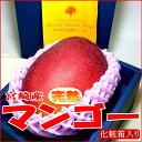 マンゴー フルーツ 宮崎産 完熟マンゴー 大玉 3Lサイズ 1玉化粧箱○店長おすすめ果物です甘いトロピカルフルーツの女王です☆初夏の風物詩となりました アーウィン種母の日 ギフト02P23Apr16
