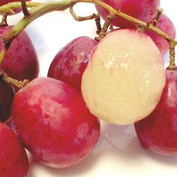 ぶどう レッドグローブ葡萄(れっどぐろーぶぶどう) 約2kg チリ・アメリカ産ワインカラーの大粒で、甘いブドウです 「種ありぶどう」【ラッキーシール対応】