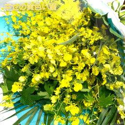 蘭(ラン) 華やかな黄色い蘭 オンシジウム 花束 8本以上 M 送料無料 最短3日以内に出荷 サイズH50cm W40cm 誕生日 ブーケ プレゼント 結婚祝 生花 長寿 お祝い