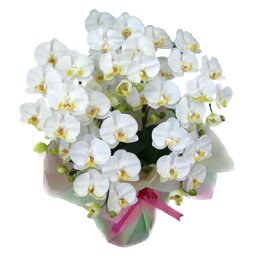 胡蝶蘭(全般) 光触媒 造花 胡蝶蘭 5本立ち 大輪 白 M