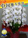 3本 胡蝶蘭3本立ち33輪以上 蕾含む 中国地方 広島 岡山 島根 鳥取 山口